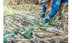Những kịch bản áp thuế phòng vệ thương mại ngành đường