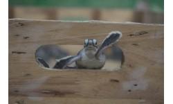 Ghi nhận Kỷ lục Bảo tồn Rùa Xanh tại Six Senses Côn Đảo